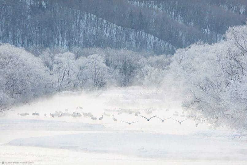 Cranes Take Flight at River