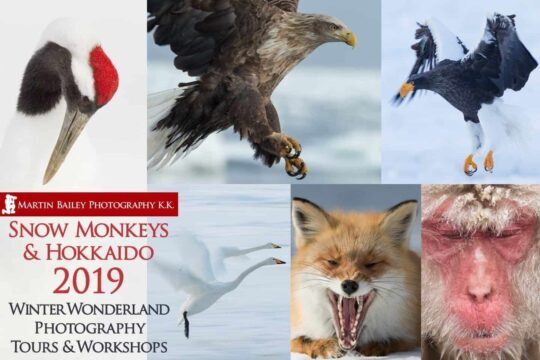 Snow Monkeys & Hokkaido Tour 2019