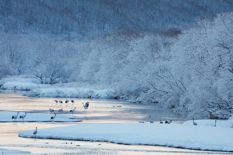 Snowy Morning at Setsuri River