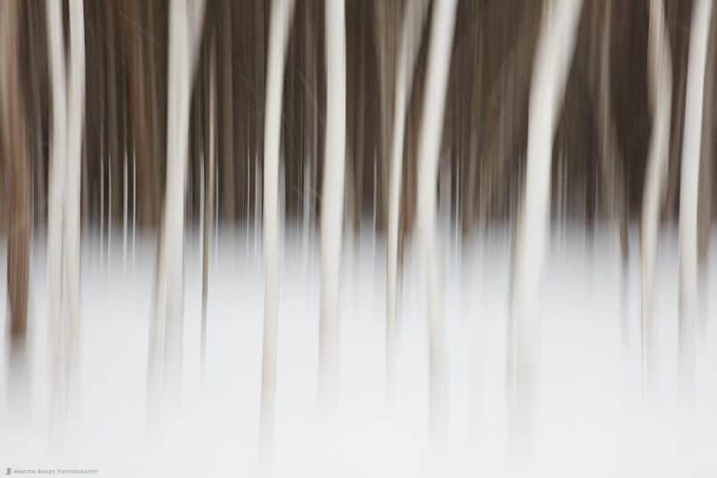 Haunted Trees