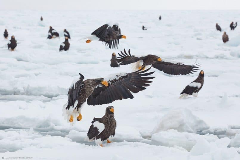 How Many Eagles!?
