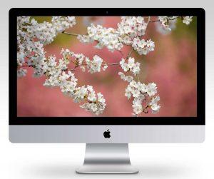 Someiyoshino Cherry Blossom Wallpaper