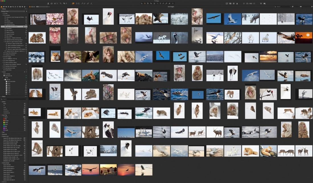 Japan Wildlife Portfolio 135 Images