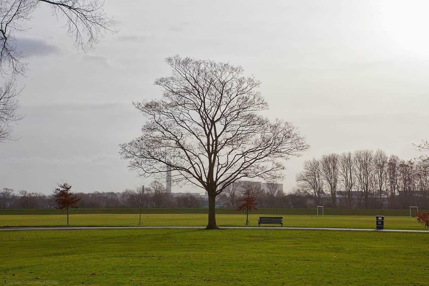 Tree and Power Station (70mm from 70m)