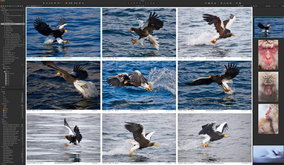 Sea Eagle Selection Process