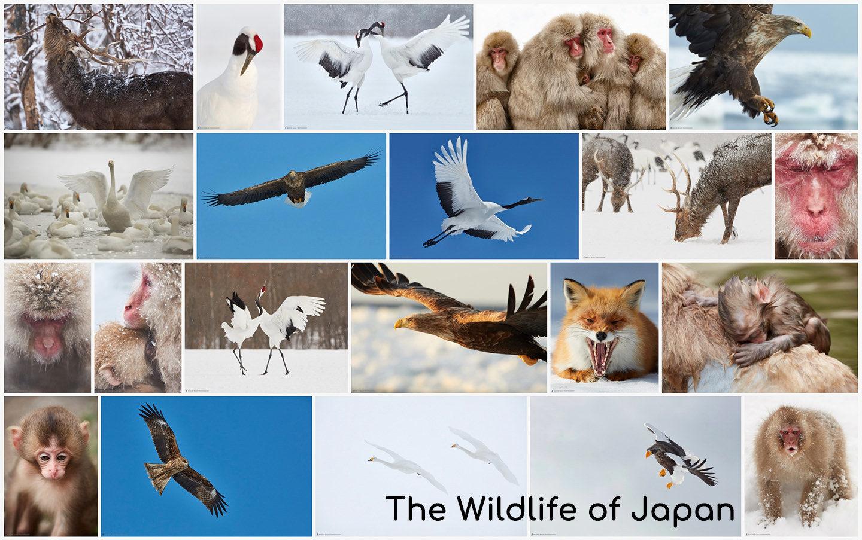 The Wildlife of Japan Portfolio