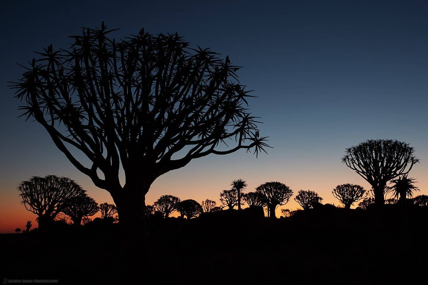 Dusk Quiver Trees