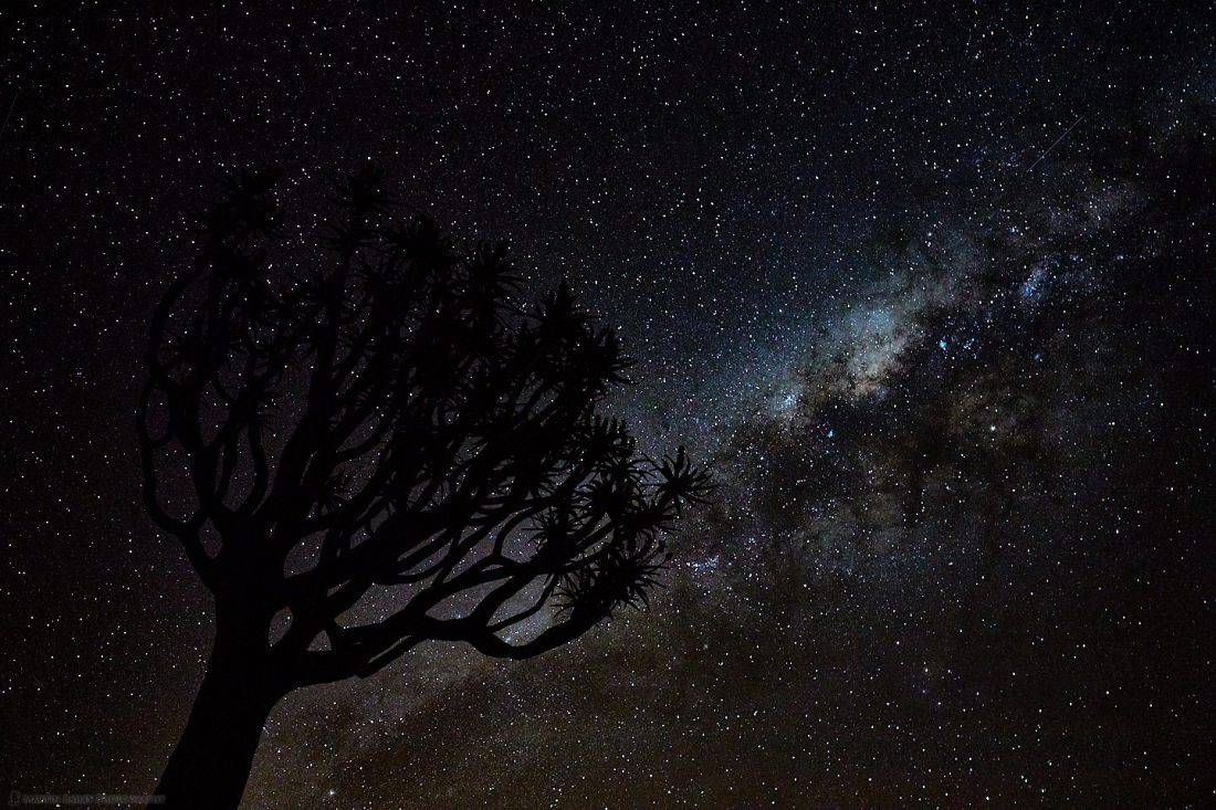 Quiver Tree and Milky Way