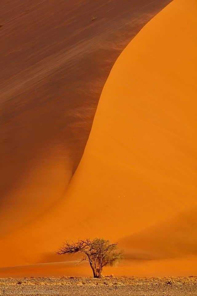 Tree and Dune #40