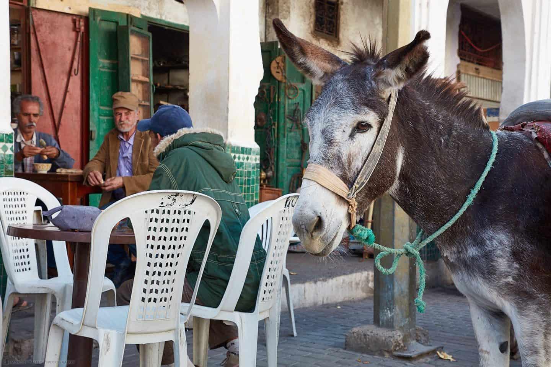 Patient Donkey