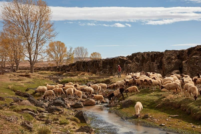 Shepherd with Sheep and Mountain Stream