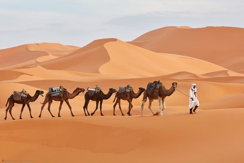 Camels and Handler in Sahara