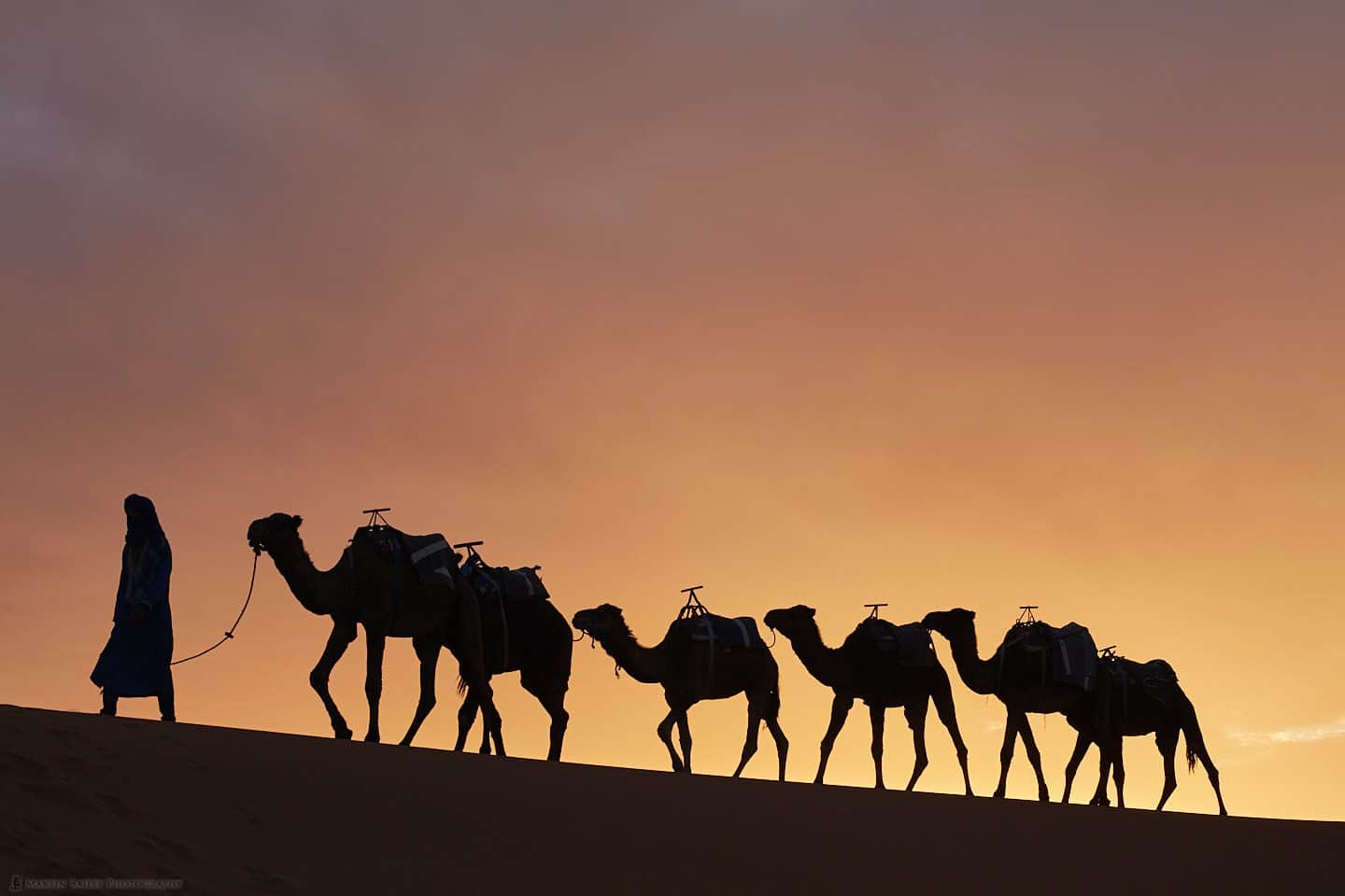 Camels with Saharan Sunset