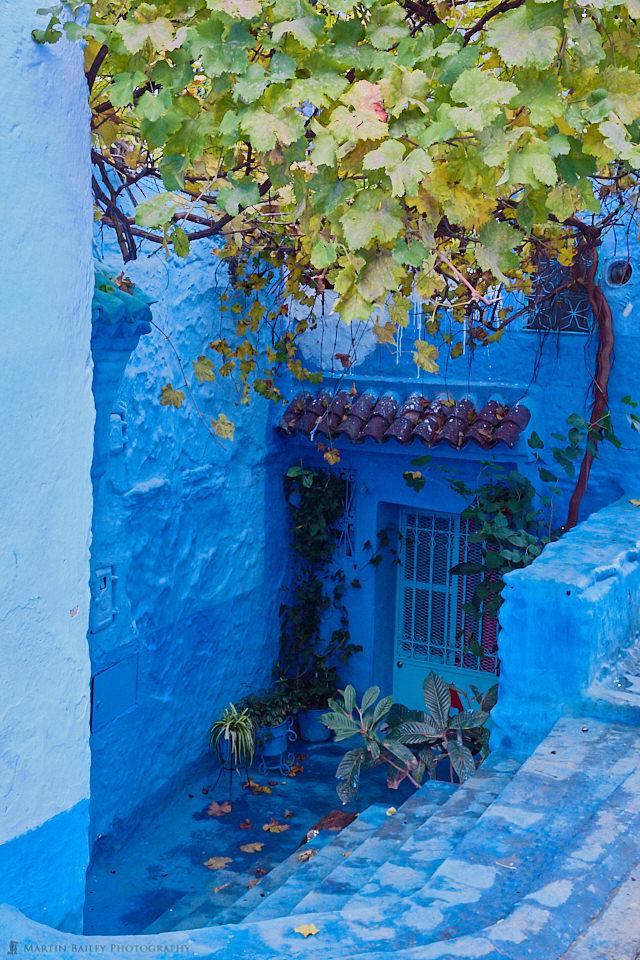 Vine in Blue
