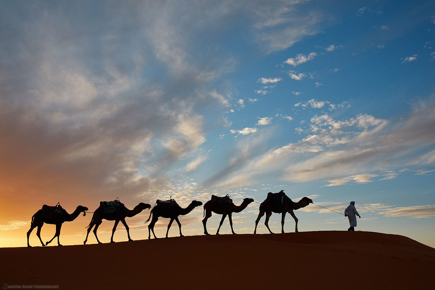 Camel Silhouettes at Sunset