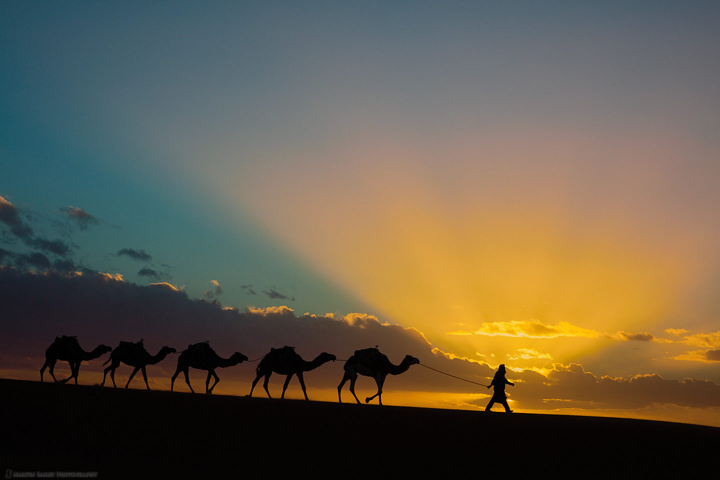Camels with Sun Rays