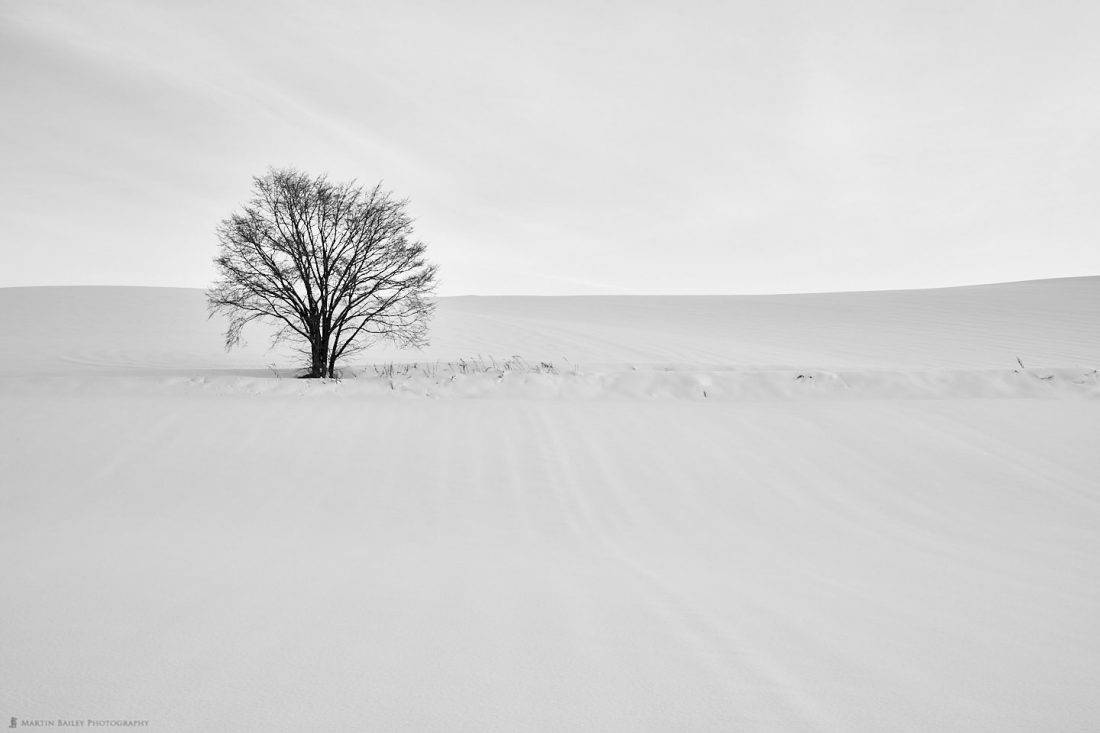 Tree on Ploughed Hill