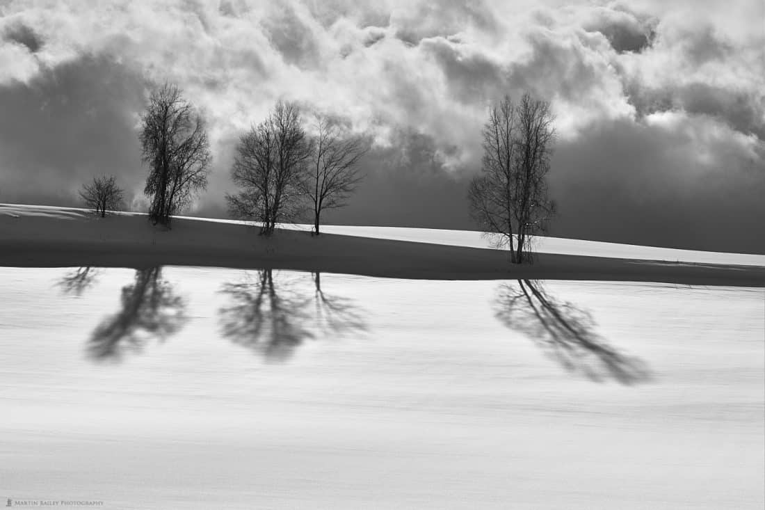 Five Trees Five Shadows