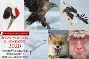 Snow Monkeys & Hokkaido Tour and Workshop 2020