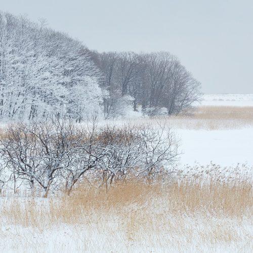 Winter Estuary