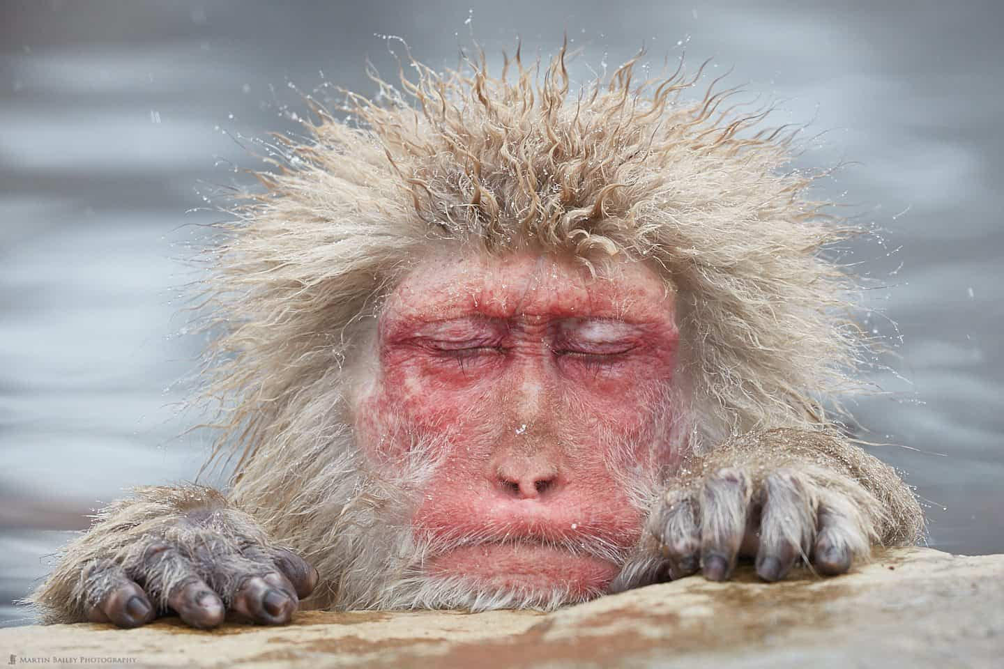 snow monkeys archives martin bailey photography