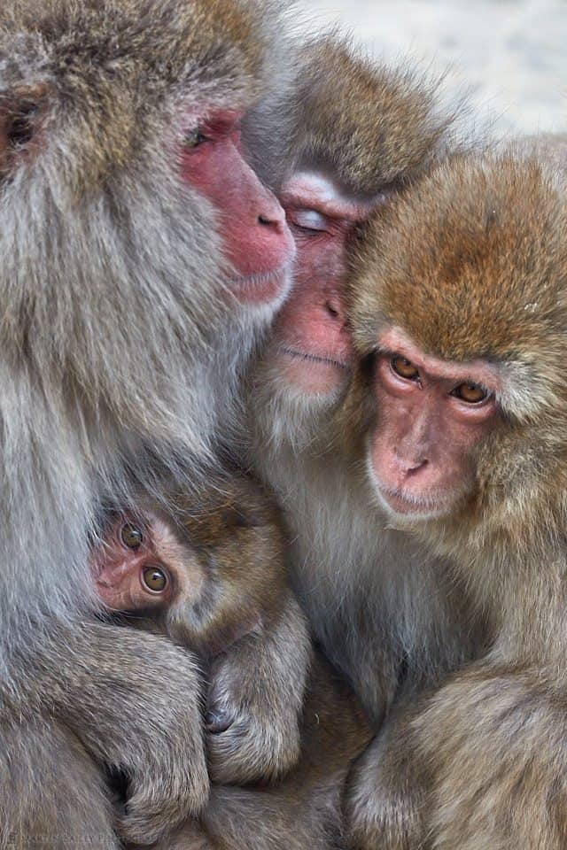Monkey Huddle