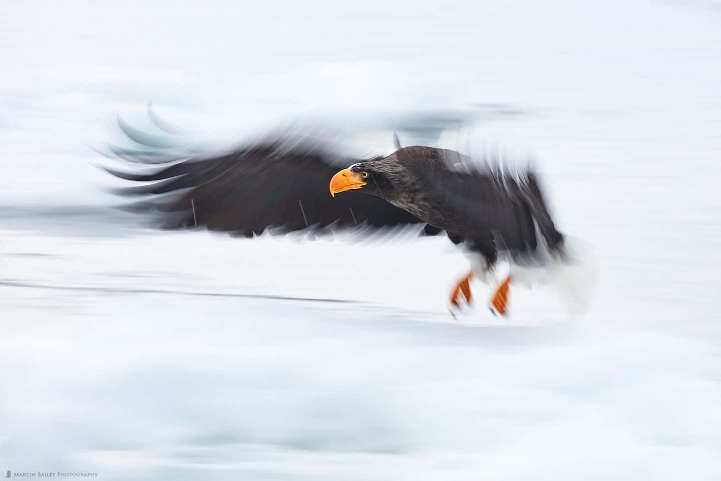Eagle in a Flap