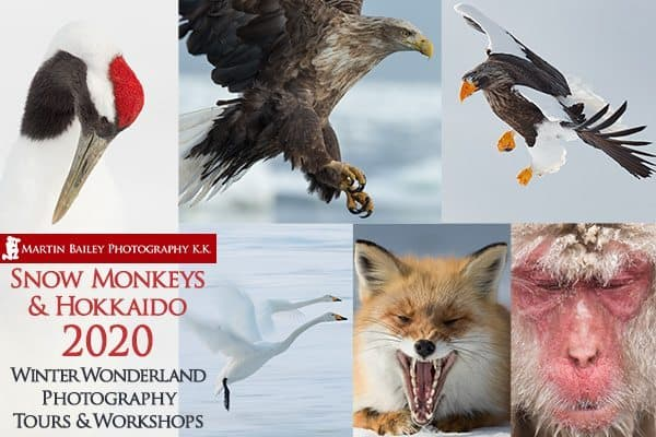 Snow Monkeys & Hokkaido Tour & Workshop