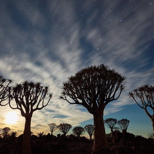 Moonlit Quiver Trees