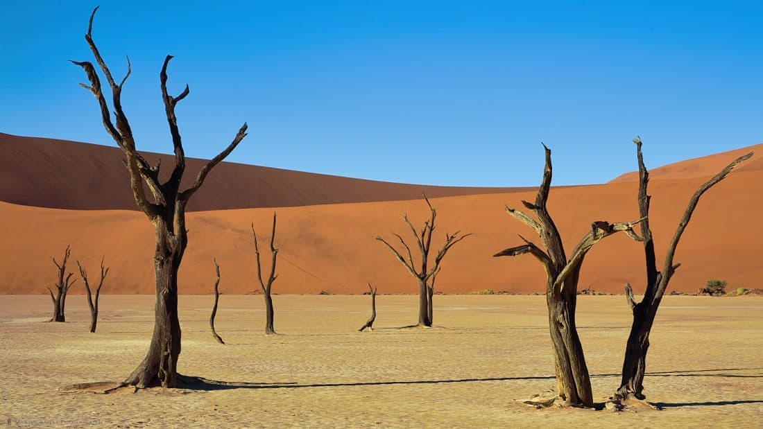 Deadvlei Camelthorn Trees