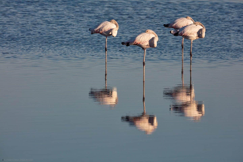 Flamingo Foursome