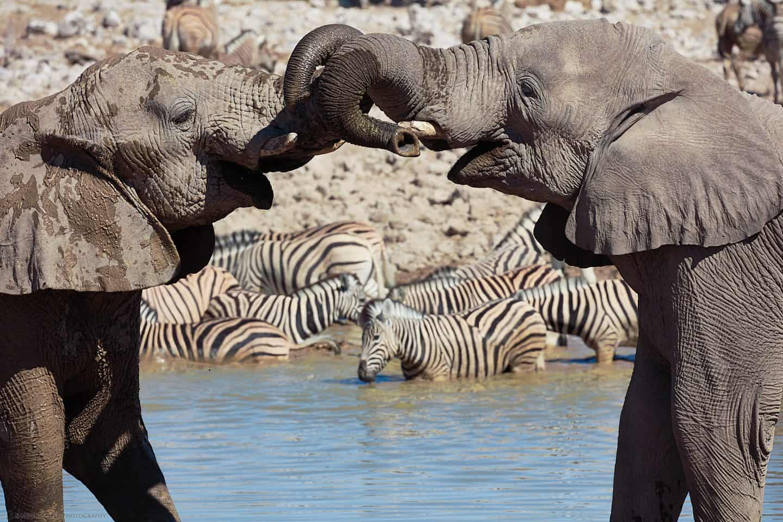 Elephant Bonding