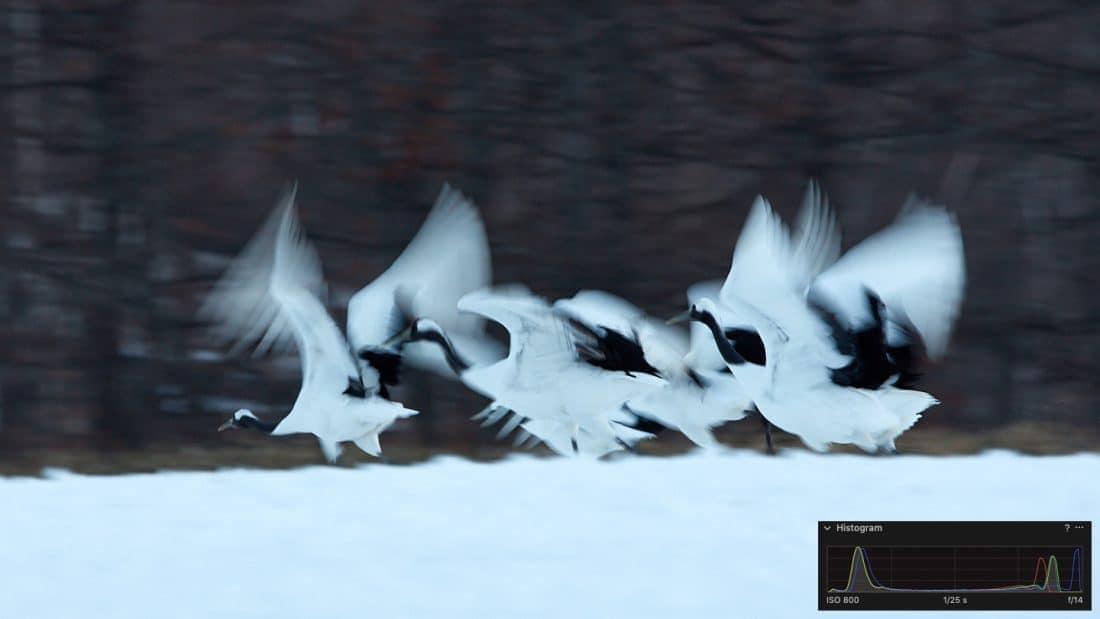 Cranes Taking Flight (with Histogram)