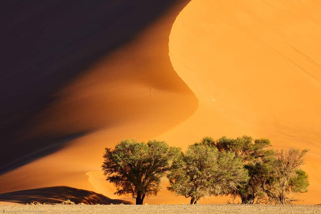 Dune #35 Closer Still