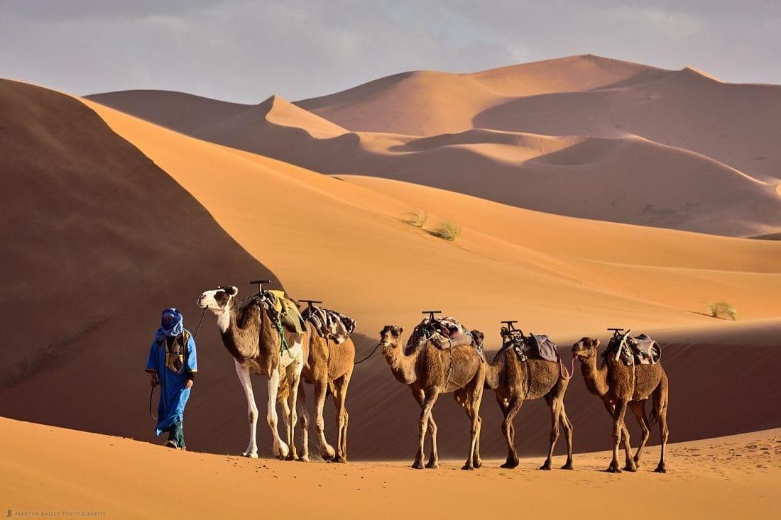 Camel Handler in Sahara