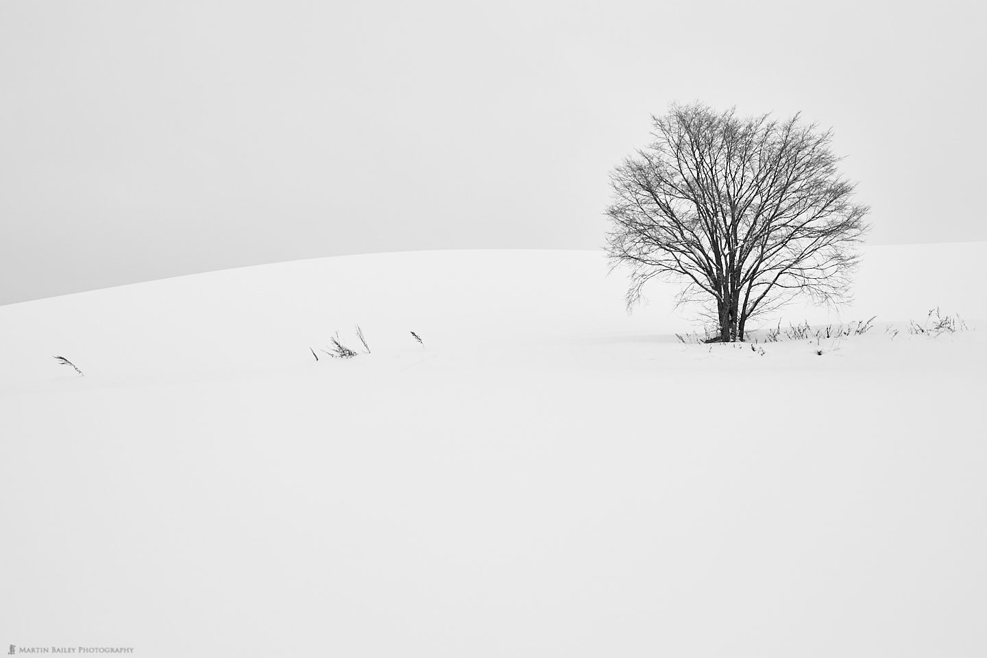 Lone Tree with Grasses