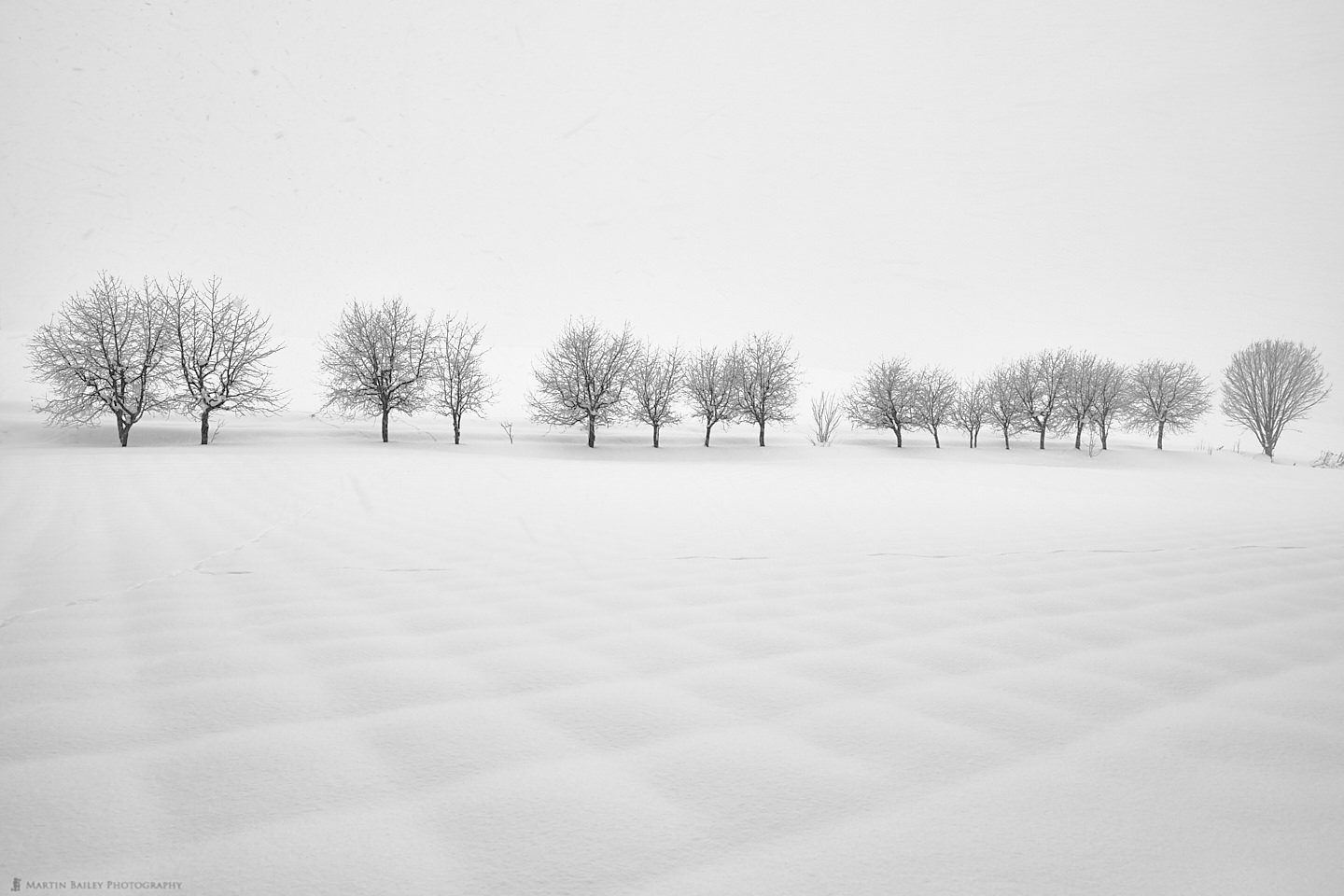 Trees and Patchwork Snow