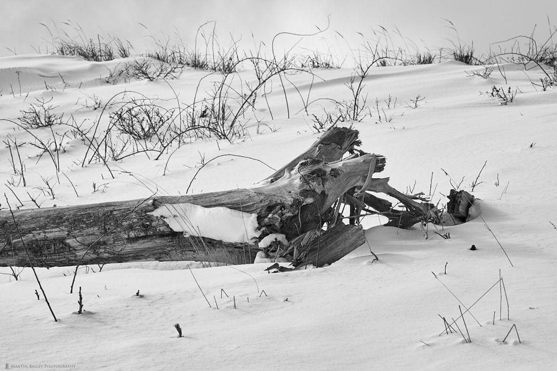 Snowdrift Wood