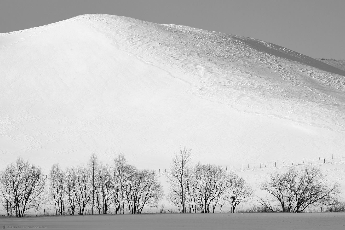 Trees in Shadow, Mountain in Light