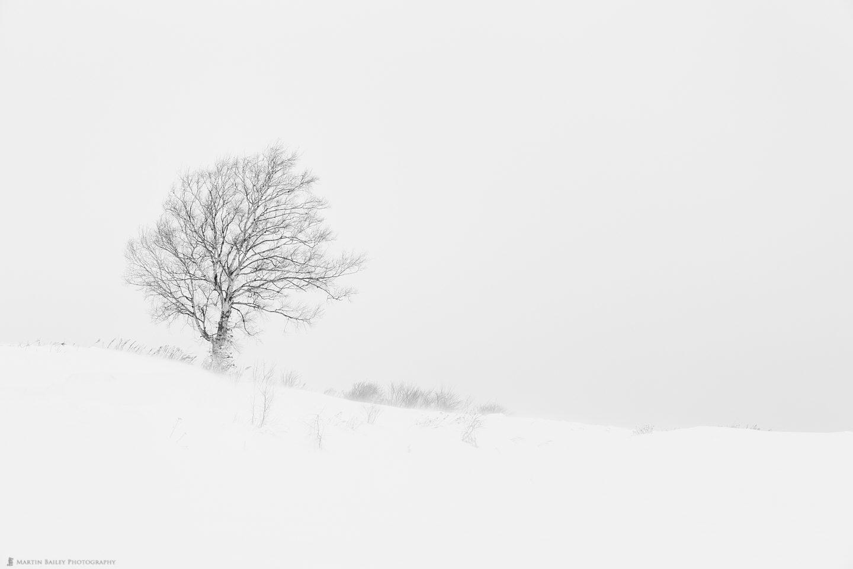 Martin's Tree