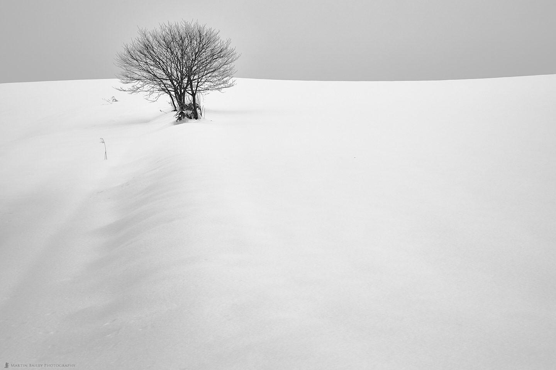 Tree in Snow Drift