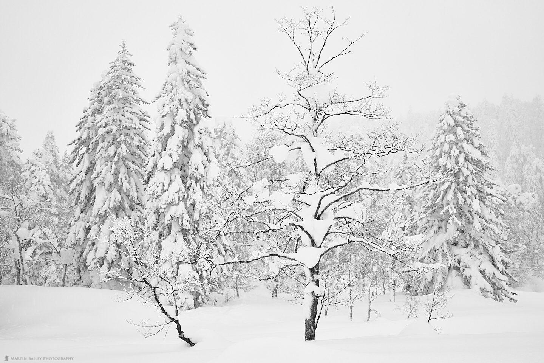Mount Asahi Big and Small Trees