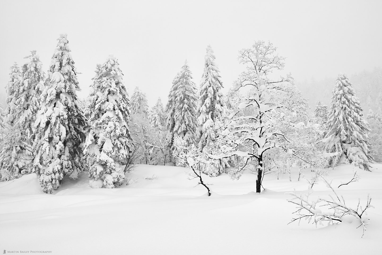 Mount Asahi Winter Wonderland