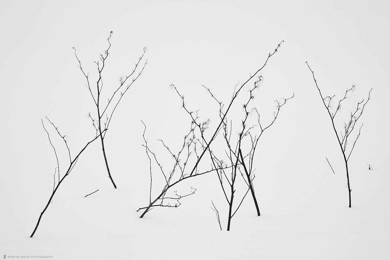 Zigzag Twigs