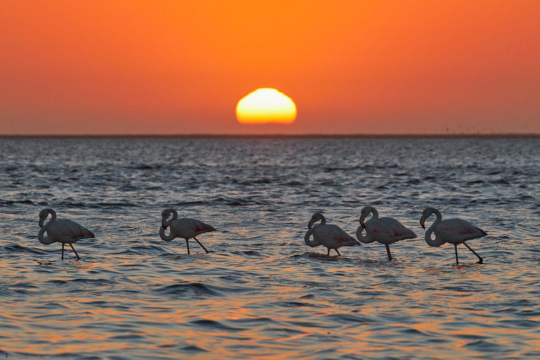 Walvis Bay Flamingo Sunset
