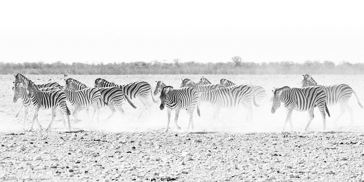 Zebras and Dust
