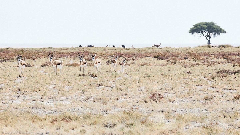 Springbok Procession