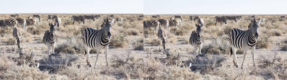 Zebra 3D Image