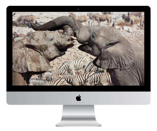Elephant Greeting Wallpaper Mockup