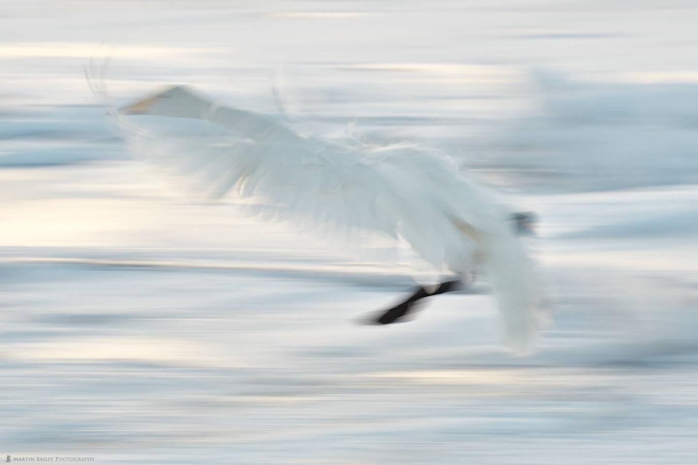 Wing Flurry